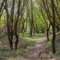 В чаше леса :: Юрий Стародубцев