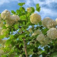 Весна в расцвете :: Константин Снежин