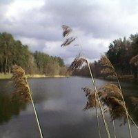 Весна в Пуще-Водице! :: Миша Любчик
