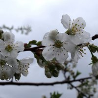 весенний дождь :: Ирина Голубева