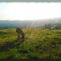 И повстречали мы ослицу...всю в брызгах солнечных лучей!! :: Людмила Богданова (Скачко)
