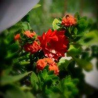 Живые цветы :: Валерий Лазарев