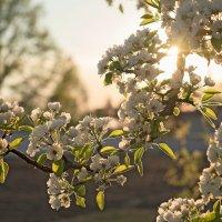 Весна. :: Андрий Майковский