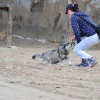 Бездомные собаки вызывают сочувствие :: Валерий Лазарев