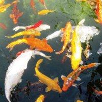 """а вот и рыбки...""""просто слоны"""" :: Anna Sokolovsky"""