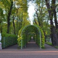 Летний сад :: Наталья Левина