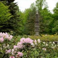 Цветущий рододендрон в Японском саду :: Ирина Н