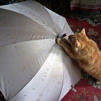 Ну, куда ты в дождь?... :: Елена Федотова
