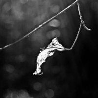Surrender :: Катерина Чебышева