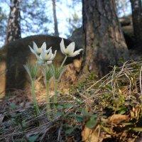 Весна :: Сергей Марков