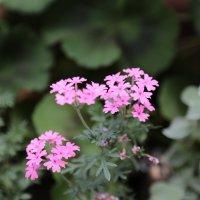 Цветочный хоровод-55. :: Руслан Грицунь