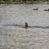Водоплавающие :: Александр