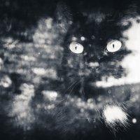 Кошка у окошка :: Natali Tim