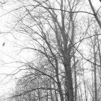 лес туман :: Олег