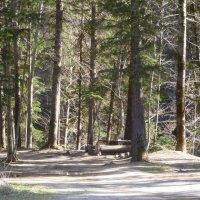 Полянка в лесу. :: Юлия Бабитко
