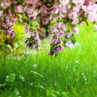 Такая короткая весна :: Альберт Ханбиков