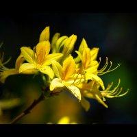 цветок :: Александр Караученко