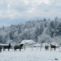 выпал первый снег... :: Elena Wymann