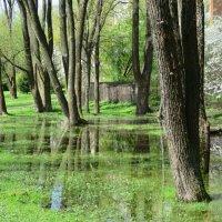 Весна... :: novik Юрий Новиков
