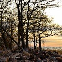 Брег каменистый и пустой :: Николай Танаев