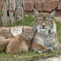 А мы похожи на маму? :: Владимир Максимов