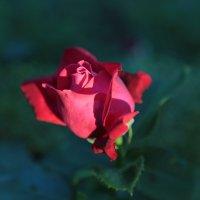 Цветочный хоровод-65. :: Руслан Грицунь