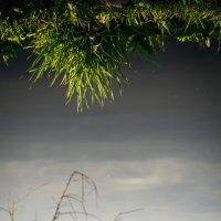 Весна идет к нам семимильными шагами... :: Maxim Rozhkov