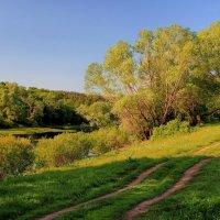 Солнечной росистой тишиною... :: Лесо-Вед (Баранов)