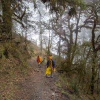 Мистический лес, Непал :: Atuan M