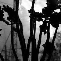 Цветок во тьме :: Света Кондрашова