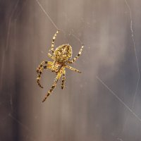 spider :: Vitalij P