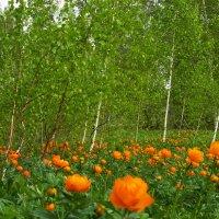 Пора цветения огоньков :: Олег Дмитриев
