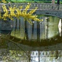 мостик с отражением :: Елена
