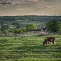 пейзаж с коровой :: павел бритшев