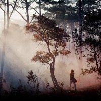 Охотница за светом :: Денис Пострыгайло
