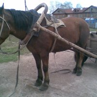 Лошади тоже бывают рабочими :: Владимир Ростовский