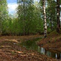 В майском лесу. :: Galina S*