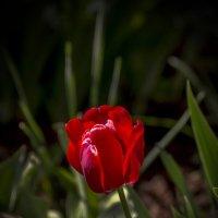 пылающий в тени :: gribushko грибушко Николай