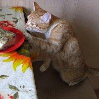 Вы зачем перцем посыпали ? Злодеи ! :: Мила Бовкун