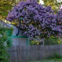 И зачем ехать в Ботанический сад? :-))) :: Валентина Данилова