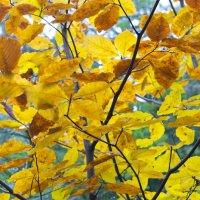 Осень :: Юлия Куликова