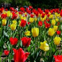 В Верманском саду :: Mariya laimite
