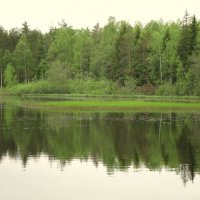 Лесные красоты. :: Валентина Жукова