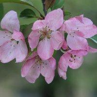 Жизнь в розовом цвете.... :: Tatiana Markova