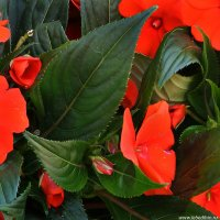 Красное и зеленое :: Дмитрий Лебедихин