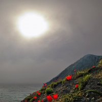 Утренняя звезда в весеннем тумане :: viton