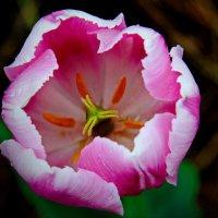 В самом центре цветка. :: Маргарита ( Марта ) Дрожжина