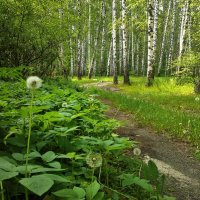 Майский лес :: Мария Богуславская