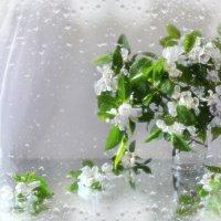 Лучше нету того цвету, когда яблоня цветет.... :: Валентина Колова