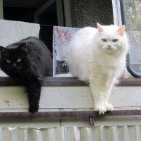 Две сестры , :: Мила Бовкун